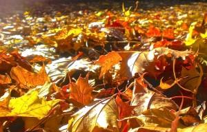Hochzeit im Herbst - viddle
